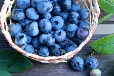 ハスカップとブルーベリーの違いとは?栄養素や入手しやすさを比較